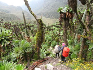Mit der Multi-Aktiv-Safari auf dem Rwenzori Trail