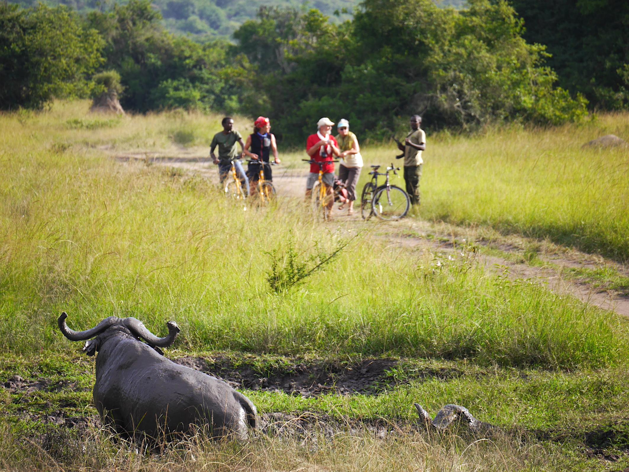 Unsere Multi Aktiv Safari im Lake Mburo Nationalpark ist eine spannende Pirschfahrt nach Giraffen, Zebras und Antilopen