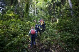 Bwindi Trail auf der Multi Aktiv Safari.