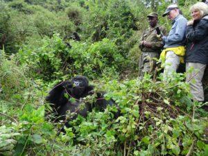 Auf der Mountain Bike Safari ist auch das Gorilla Trekking eingeschlossen.